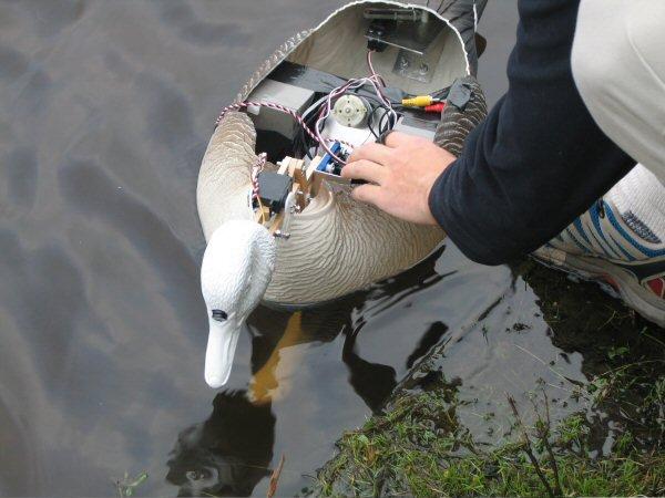 Image: Natalie Jeremijenko, Robotic Geese, 2003