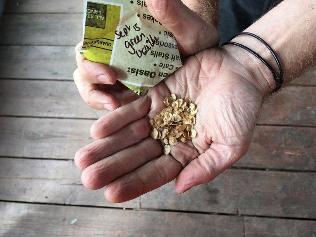 Seeds. Photo: Sara Heitlinger
