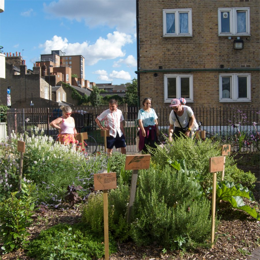 Wilton Estate Community Garden. Photo: Sara Heitlinger